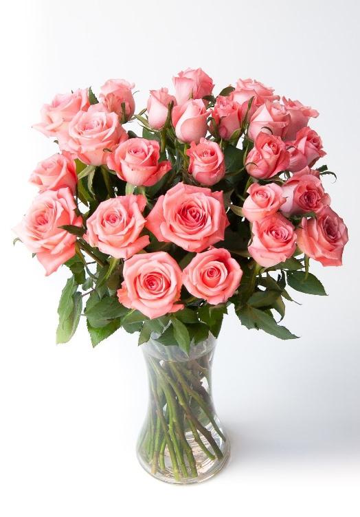 Love me tender (24 roses)